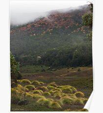 Button Grass Poster