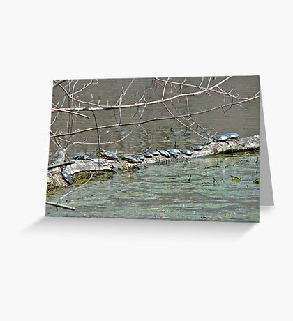 Painted Turtle Haul Out - Chrysemys picta Greeting Card