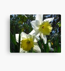 Daffodil concerierges Canvas Print