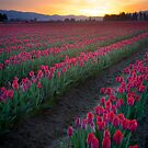 Skagit Valley Dawn by Inge Johnsson