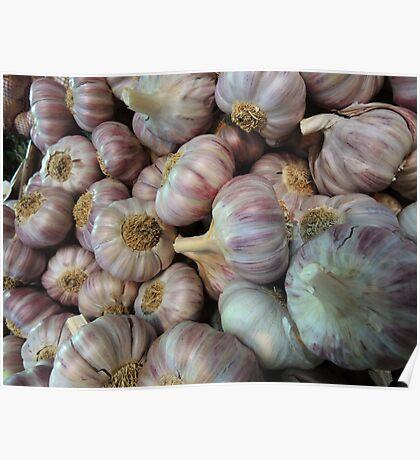 Pink garlic Poster