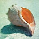 She saw a seashell... by Suzanne Cummings