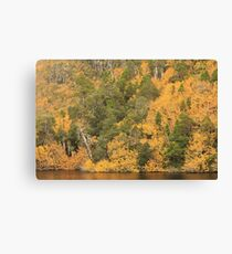 Crater lake fagus #1 Canvas Print