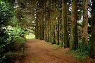 Come follow me #2 ... Mt Wilson NSW by Rosalie Dale