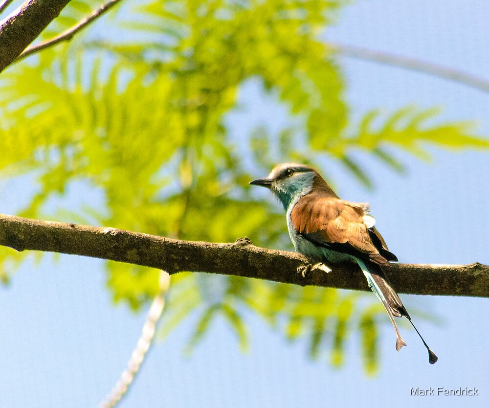 Small bird 3 by Mark Fendrick