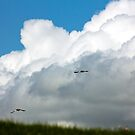 Geese in Formation by Mark Battista