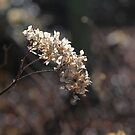 Bokeh Spring by John Dalkin