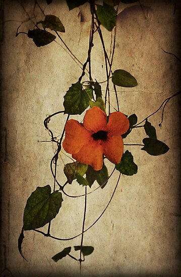 Fading Fast Today by Denise Abé
