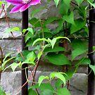 Single Bloom on a Trellis by Veronica Schultz