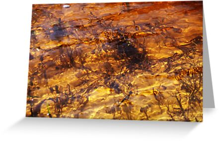 My old river. II by Bluesrose