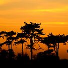 Sunset Trees by SerenaB