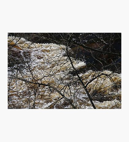 My wild old river Photographic Print