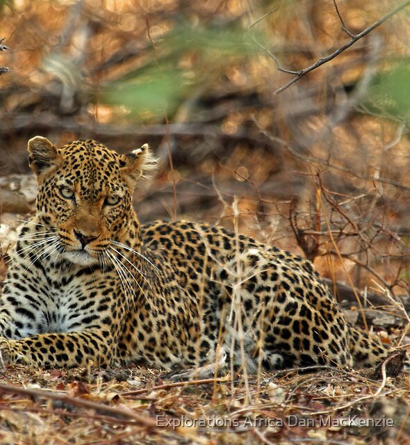 Penetrating eyes by Explorations Africa Dan MacKenzie