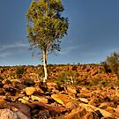 Stand Tall - Ross Graham Gorge - Kalbarri by John Pitman
