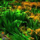 Cylburn Garden by ifreedman