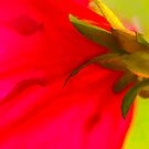 Red Azelia by ifreedman