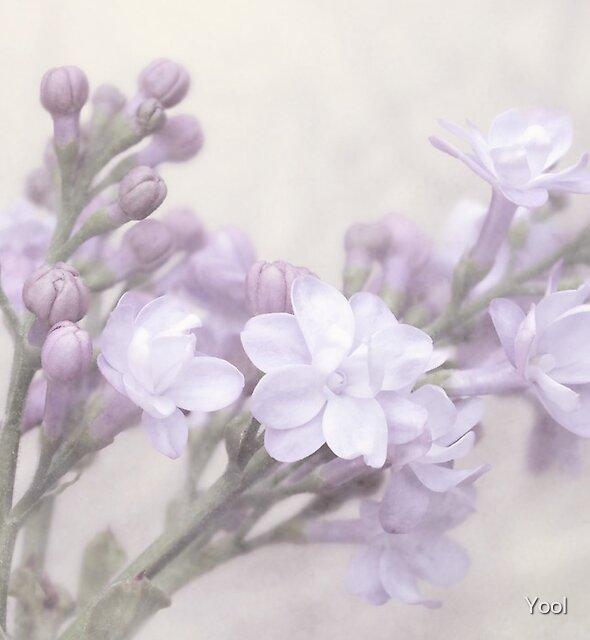 Lilacs by Yool