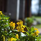 Boscobel House Flowers by CheesyGoat