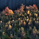 Autumn trees by Michel Raj