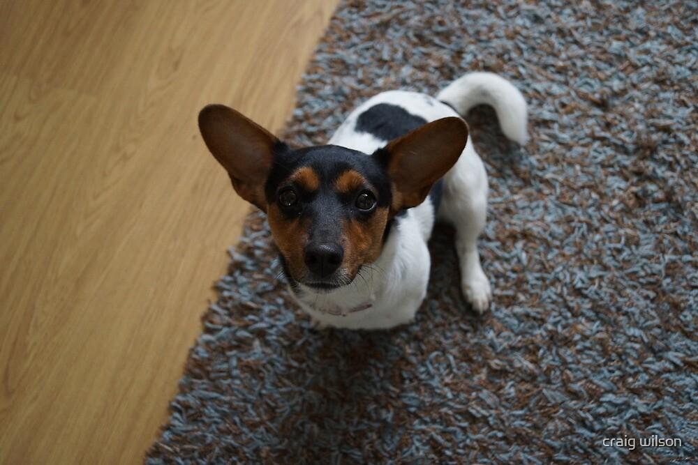 jack russel dog by craig wilson