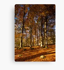 Grass Woods, Yorkshire Dales Canvas Print