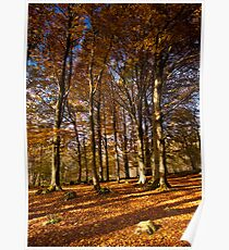 Grass Woods, Yorkshire Dales Poster