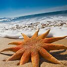 Starfish on the Beach by Alex  Bramwell