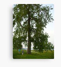 Boys by a Big Tree Canvas Print