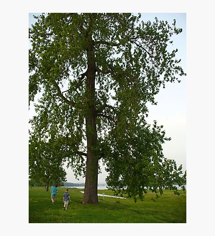Boys by a Big Tree Photographic Print