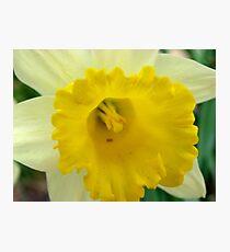 Springtime Macros Photographic Print