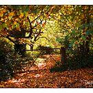 Autumn in Daylesford by Craig Holloway