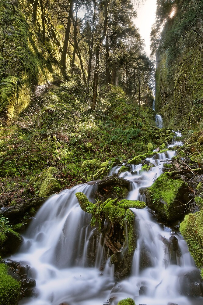 Pacific Crest Falls III by Tula Top