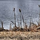 River Reeds by Barb Miller