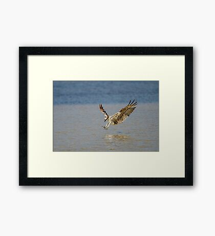 Claws First Framed Print