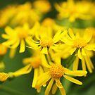 Yellow Flowers by Seth LaGrange