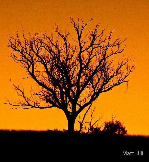 A tree somewhere by Matt Hill