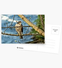 Sparrowhawk Postcards