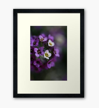 Flower Ball Framed Print