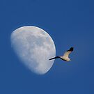 Fly me to the Moon by John Lines