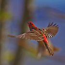 Birds of Flight by SB  Sullivan