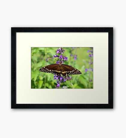 Miss Butterfly Brown Framed Print