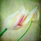 Delicate I by Anne  McGinn
