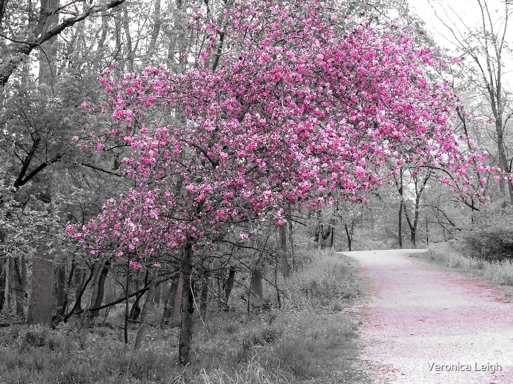 Tree in Pink by Veronica Schultz