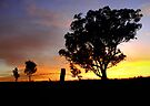 Ulandra Reserve Sunrise #1 by Rosalie Dale
