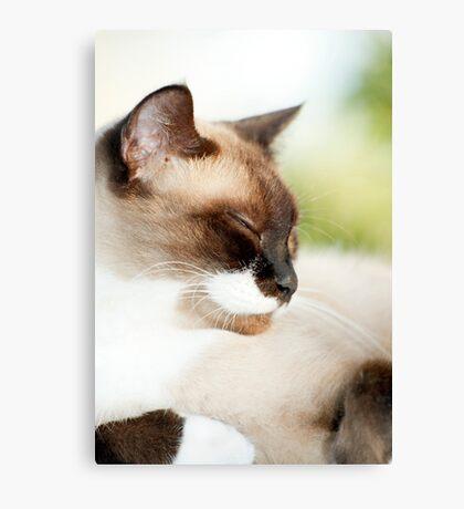 Sleepy Puss Canvas Print