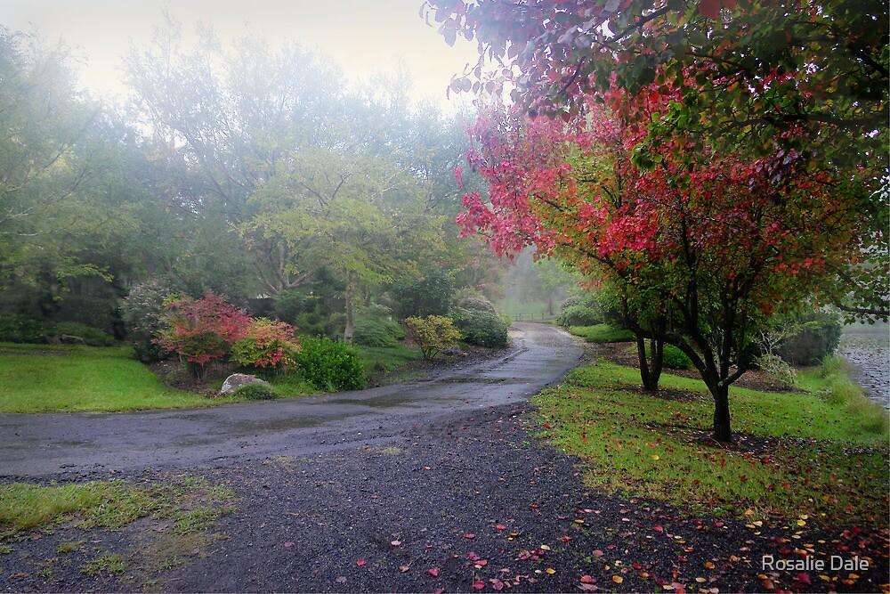Autumn mist by Rosalie Dale