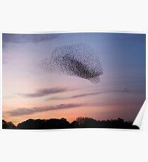 Bird Cloud - Starlings Preparing To Roost Poster