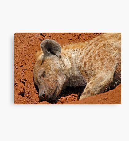 A quick nap... Canvas Print