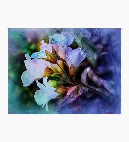 Be Amazed Photographic Print