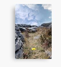 burren yellow flower plant life Canvas Print